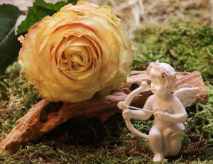 天使の人形と綺麗なバラの写真
